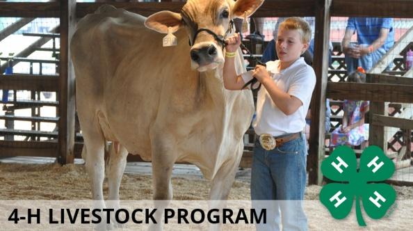 livestock_4h